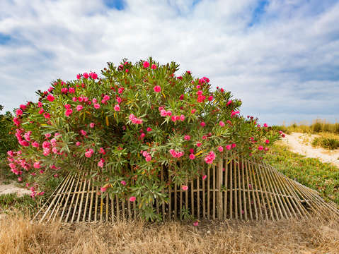 Flowers fence alvor beach