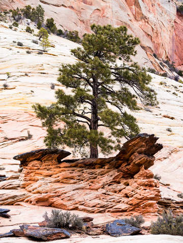 Zion national park 41