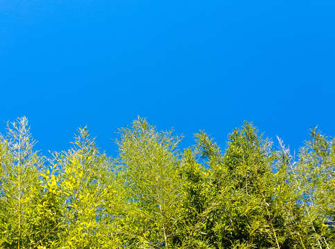 Green trees blue skies