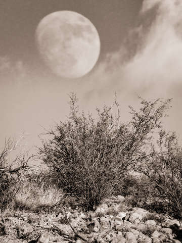 Moonrise over the high desert new mexico