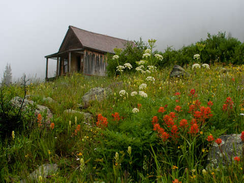 Rustic cabin and wildflowers