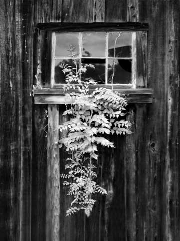 Old barn window bw infrared