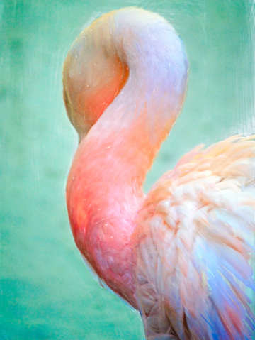 Sleeping pelican digital painting portrait format