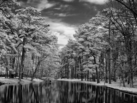 Oak reflections in infrared