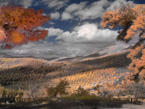 Olive groves in mycenae greece infrared