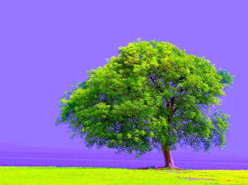 My green tree w purple sky