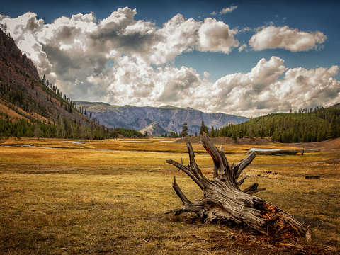 Yellowstone field