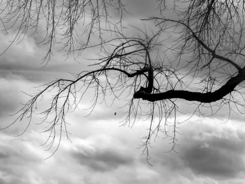 Gull clouds sky and tree black and white
