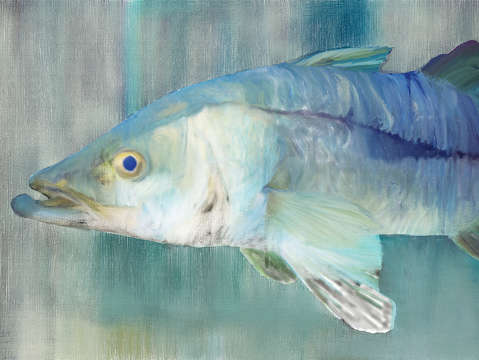 Snook 01 digital painting