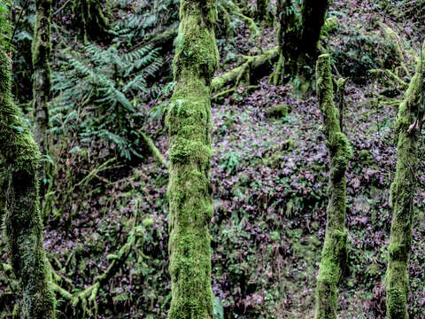 Moss at macleay park in portland