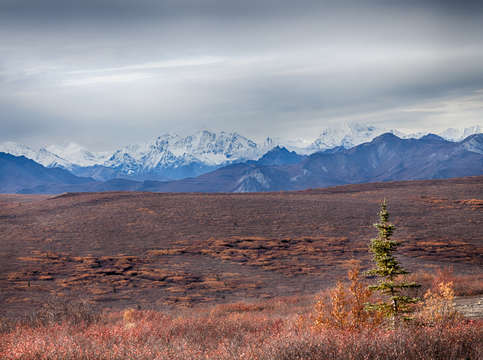 Denali mountains and tree