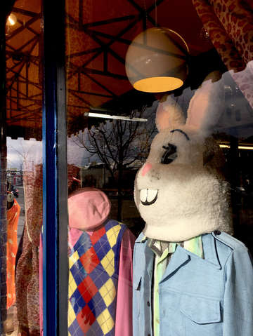 Big rabbit window