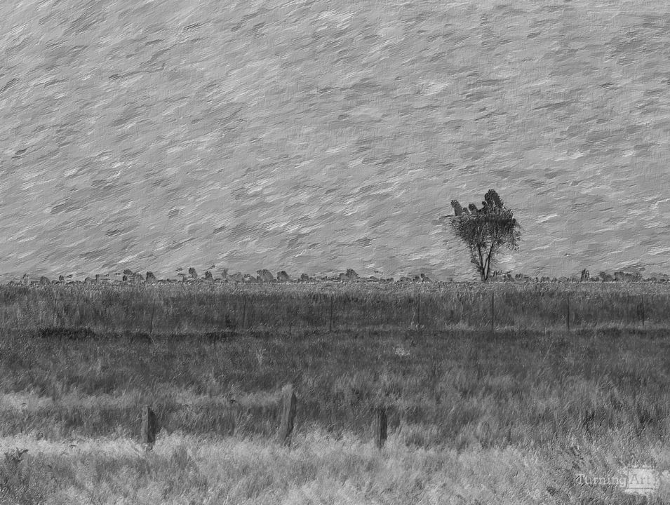 Lonely tree pano painterly grayscale