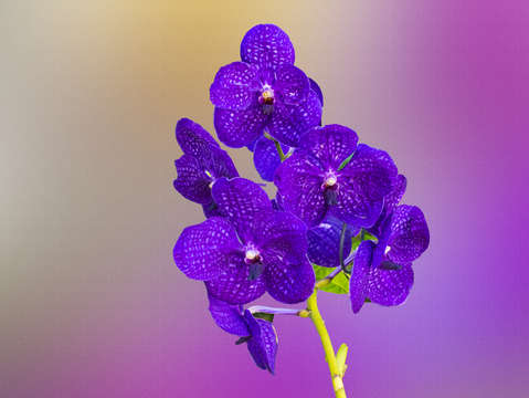 Purple orchids digital painting