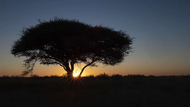 Sunset over acacia tree
