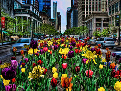 Michigan ave spring