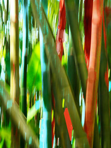 Moving trees 72 bamboo portrait format
