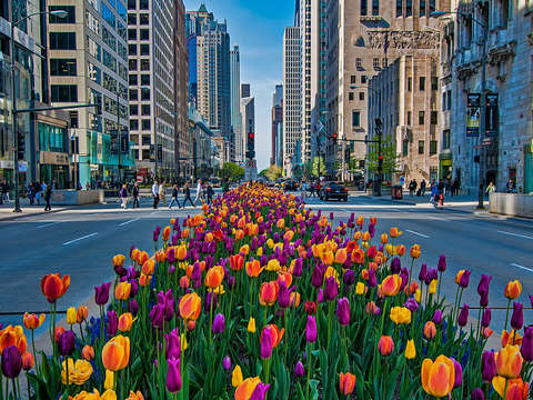 Michigan ave spring 2
