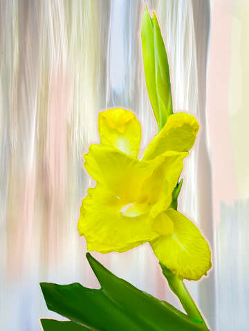 Yellow daffodil digital painting