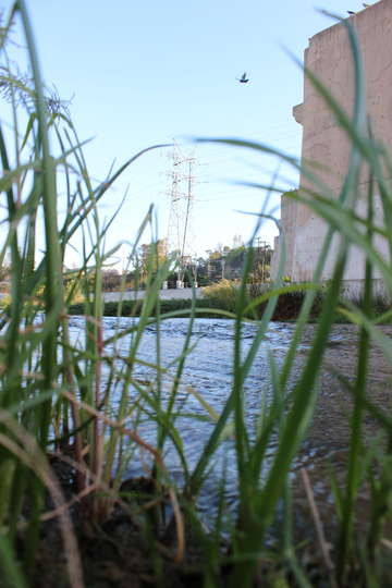 Los angeles river grass