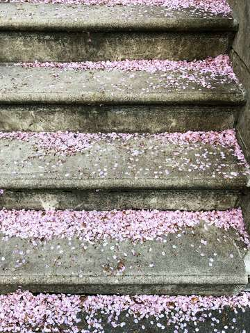 Sakura steps brooklyn new york