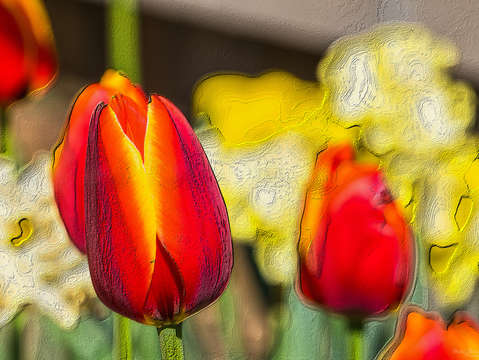 Textured garden of tulips
