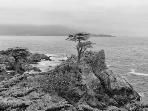 Cypress point in bw