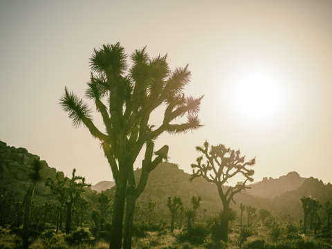 The old west joshua tree