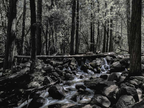 Yosemite stream bw