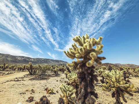 Clouds among the cholla