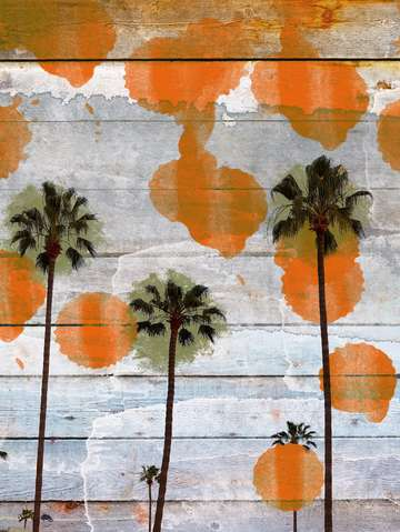 California palms ii