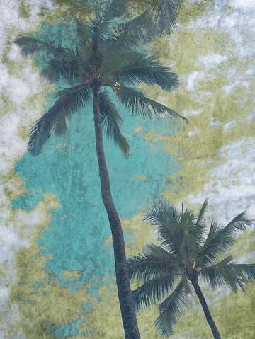 Blue beach palms