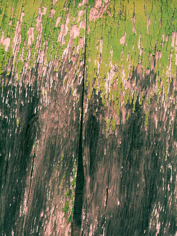Pretty green abstract texture iii