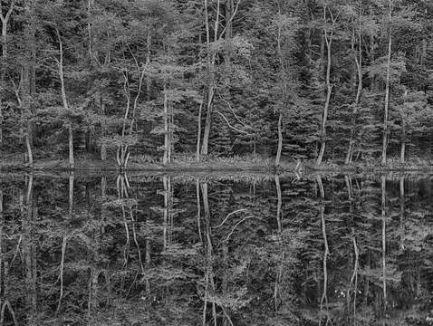 Reflections in the maine woods