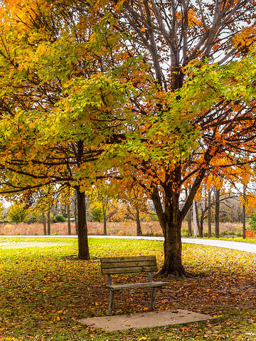 Autumn view bench