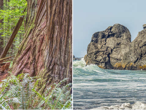 Northern california forest to coast diptych