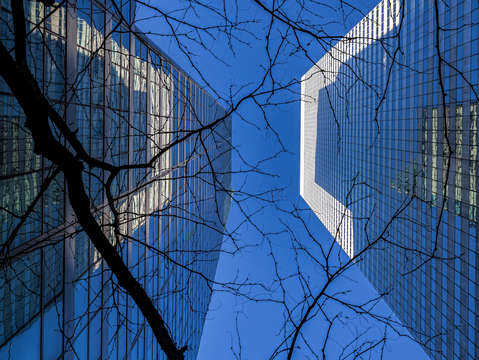 Office buildings and winter tree