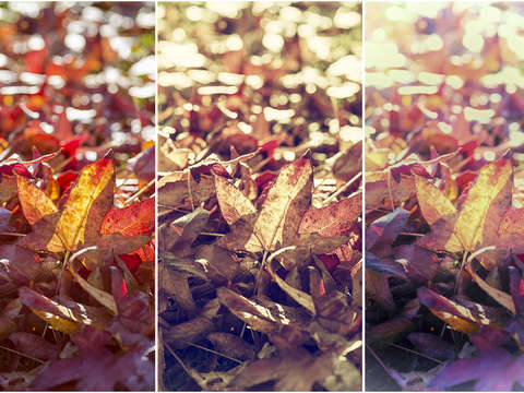 3 faces of autumn triptych