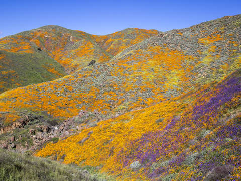 Walker canyon colors