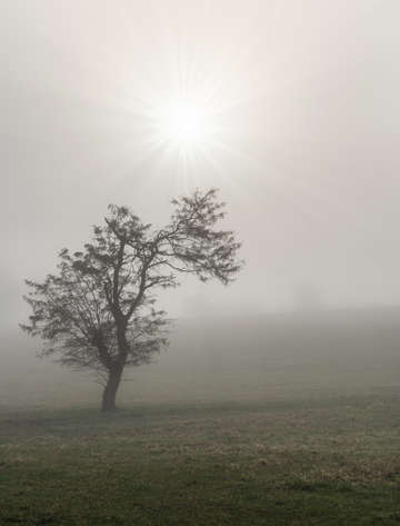 Foggy starburst tree