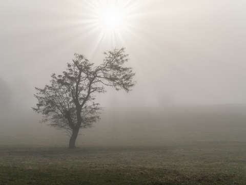Foggy starburst tree landscape