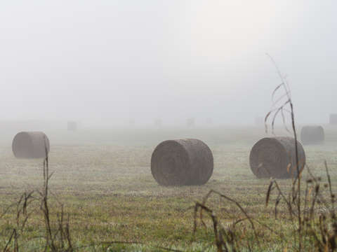 Hay bales in the fog
