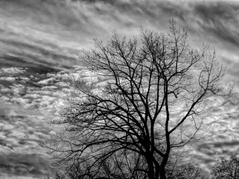 Winter trees sky and clouds 1