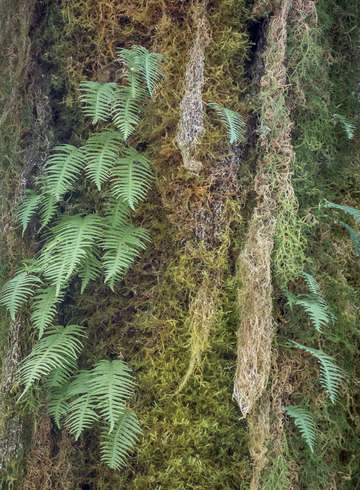 Ferns and lichen on tree