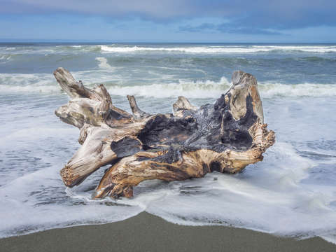 Driftwood and waves