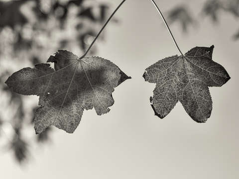 Two friends in autumn monochrome