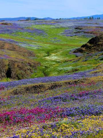 Table mountain super bloom
