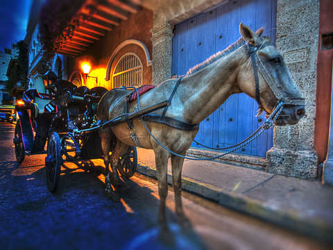 Horse carriage in color