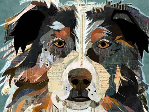 Collage australian shepherd