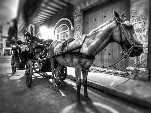 Horse carriage in black white